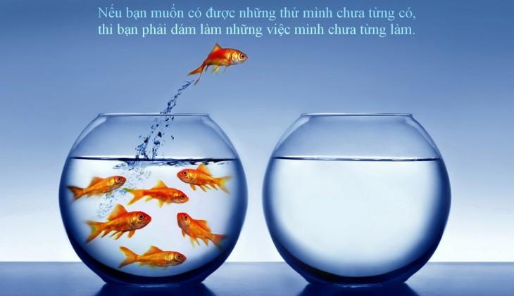 thanh-cong-chi-den-voi-nguoi-dam-mao-hiem-ce3e